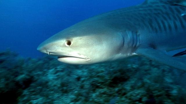 S1 Ep 9 - Sharks