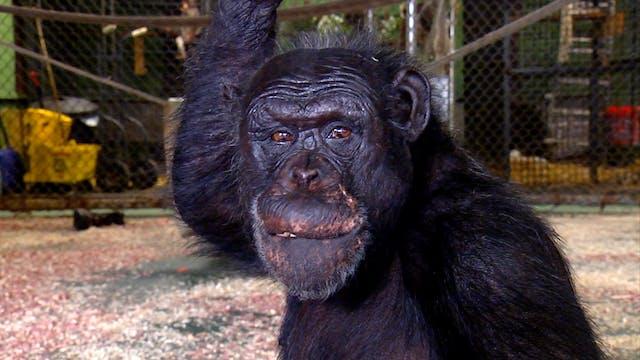 S1 Ep 5 - Primates