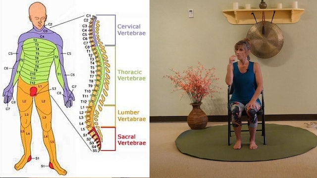 Understanding the Role of Cervical Spine Health for your entire Body! with Sherry Zak Morris