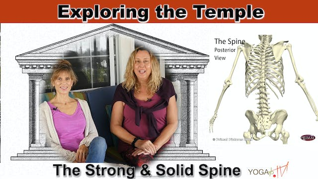 Our Spine: Strong and Solid with Sher...