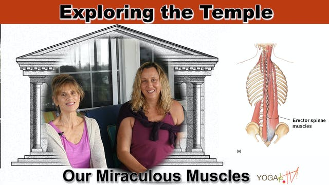 Our Miraculous and Mysterious Muscles...