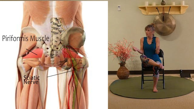 Where is the Piriformis Muscle & How ...