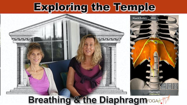 The Diaphragm and our Breathing with ...