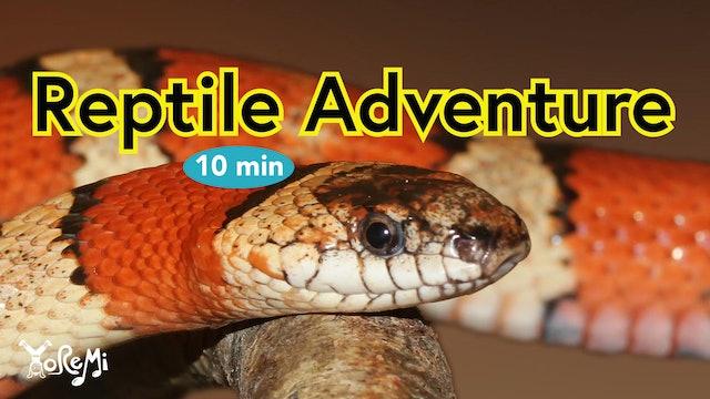 Reptiles - 10 Minutes