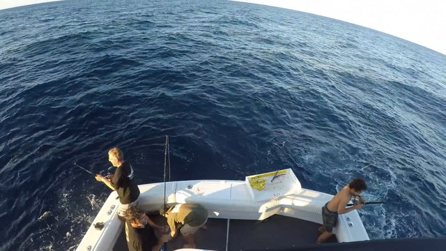 TRIP TO CABO - WIDE OPEN YELLOWFIN Pt.2