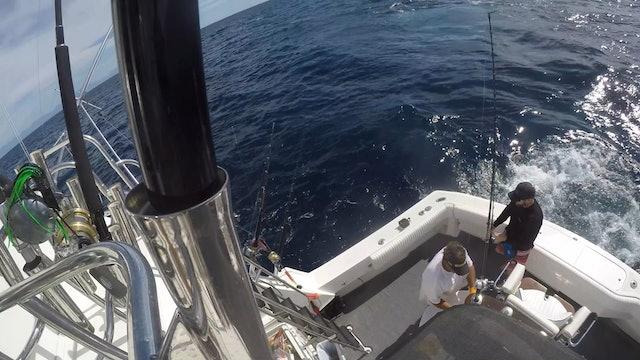 Marlin Madness