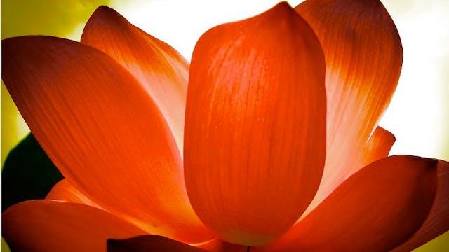Yoga Sutra Chapter 2 - Sadhana Pada