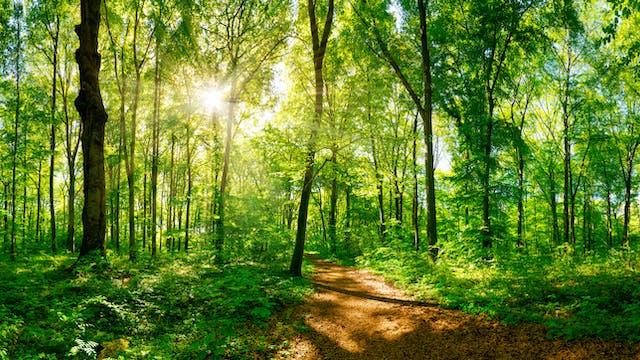 Forest Journey Yoga Nidra