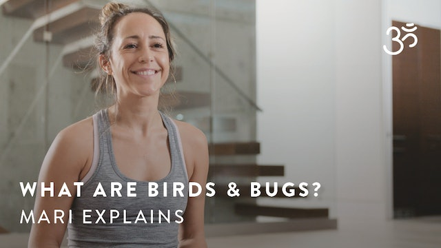 What are birds and bugs? Mari Dickey explains.
