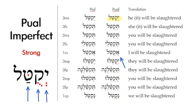 Basics of Biblical Hebrew - Session 32 - The Pual Stem Strong Verbs