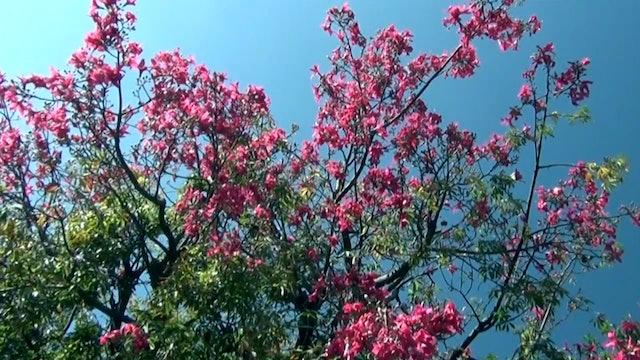 ZoneOutTV - Purple Tree