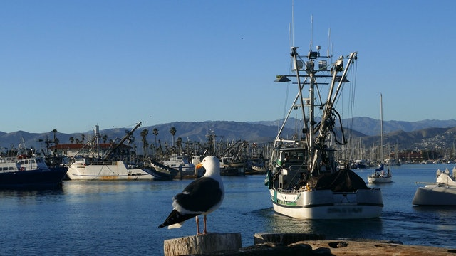 "ZoneOut TV - ""Working Harbor Evening Birds"""