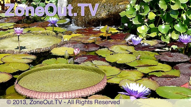 ZoneOutTV - Lily Pond at Dragonfly Falls