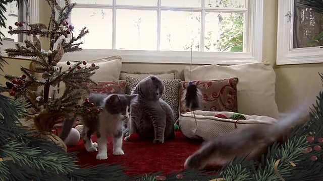 ZoneOutTV - Holiday Kittens