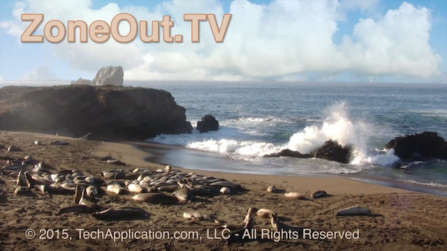 ZoneOutTV -  Seal Beach - 1 1/2 hours with nature sound
