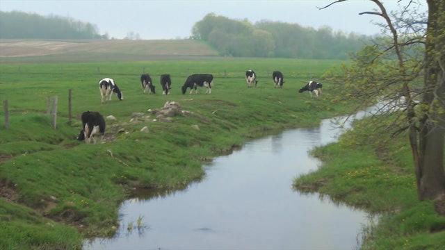 ZoneOutTV - Dairy Land