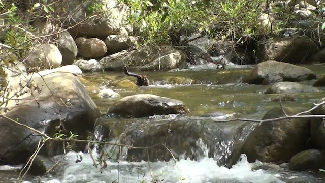 ZoneOutTV - Mountain Stream