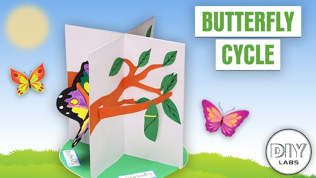 Butterfly Cycle