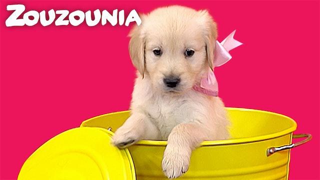 Σκυλάκια Κουταβάκια - Ζουζούνια